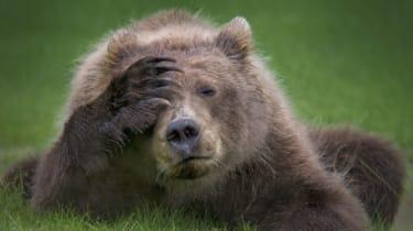 180917_comedy_wildlife_danielle_dermo_-_coastal_brown_bear_cub_with_headache.jpg