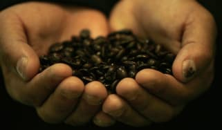 Honduran farmer holds roasted coffee beans in his hands